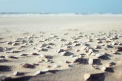 Sea Shell on a Beach